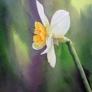 Jones_Patty_Daffodil